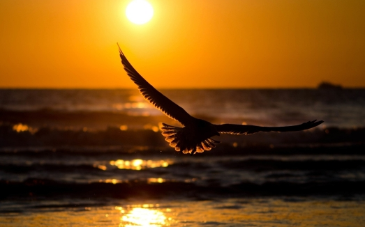 flying-bird-in-sunset